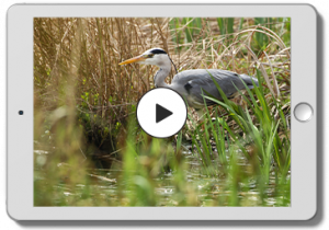 Webcast Vögel