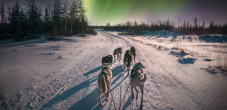 Schlittenhunde im Schnee unter Polarlichtern