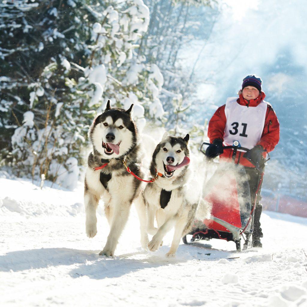 huskies schlittenfahrt