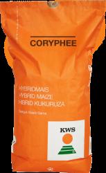 Coryphee