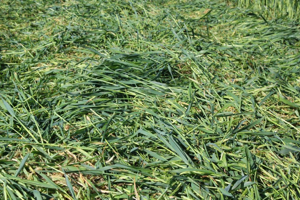 Leg bij het maaien het gewas breed weg voor een optimale droging
